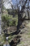 在道路的百年栗子有灌渠的兰哈龙 库存图片
