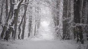 在道路的降雪在森林里 股票视频