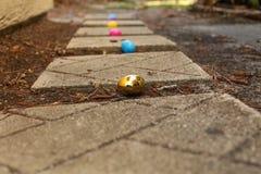 在道路的食者鸡蛋 免版税库存图片