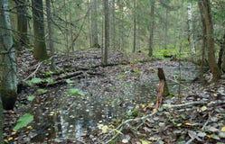 在遗骸的水在采矿场所以后 库存图片
