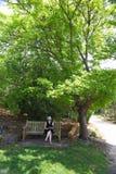 在遮荫结构树下 免版税图库摄影