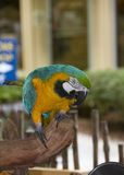 在那不勒斯动物园的一只鹦鹉 库存图片