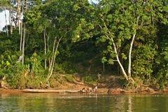 在那坡旁边的未认出的当地土著人民 免版税库存照片