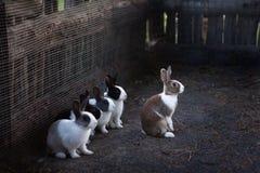 在那里的兔子把放进牧场 免版税库存照片