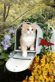 在邮箱的一只黄色平纹小猫 库存图片