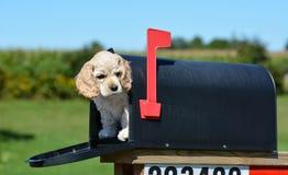 在邮箱的小狗 免版税库存照片