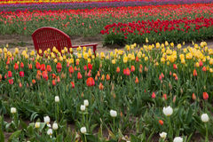 在郁金香的红色长凳 免版税库存照片