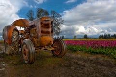在郁金香领域春季的橙色拖拉机 免版税库存图片