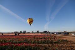在郁金香领域的热空气气球与摄影师 免版税库存图片