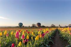 在郁金香领域的热空气气球在俄勒冈 库存照片