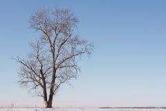 在郊外的树 库存照片