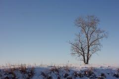 在郊外的树 免版税库存图片