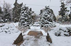 在都市住宅邻里浸泡冰冷的车道和积雪的常青树 库存照片