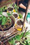 在都市庭院里种植的年轻幼木 库存照片