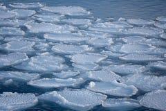 在鄂霍次克海的岸的冬天 免版税库存图片