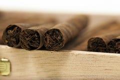 在配件箱的雪茄 免版税图库摄影