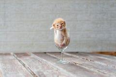 在酒杯的逗人喜爱的小猫有织地不很细背景 库存图片