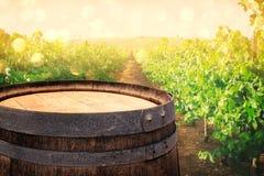 在酒围场风景前面的老橡木葡萄酒桶 库存照片