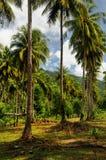 在酸值张海岛,泰国上的椰子树种植园 免版税库存图片