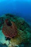 在酸值陶,泰国的美丽的巨型海绵 库存图片