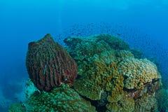在酸值陶,泰国的美丽的巨型海绵 免版税库存照片