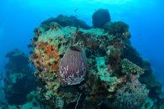 在酸值陶,泰国的美丽的巨型海绵 免版税库存图片