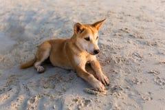 在酸值Larn的友好的狗 图库摄影