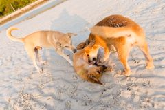 在酸值Larn的友好的狗 免版税图库摄影