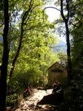 在里拉修道院附近的森林 免版税库存照片