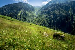 在里泽,土耳其使Ayder高原环境美化看法  免版税图库摄影