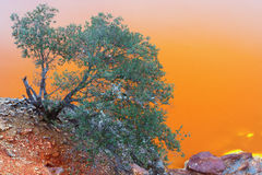 在里约Tinto的橙色背景的树 免版税库存图片