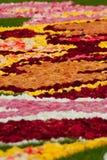 在重创的地方的花地毯在布鲁塞尔 库存照片