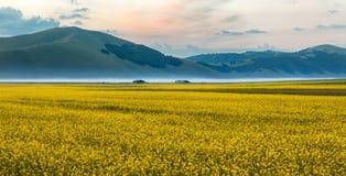 在重创的钢琴,翁布里亚,意大利的开花的油菜籽 免版税库存图片