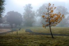 在重的浓雾下的被隔绝的树在公园 库存照片