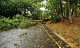 在重的风暴以后跌倒的热带树 免版税库存图片
