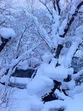在重的飞雪、雪在公园盖子树和河以后在低于凝固点的天 免版税库存图片