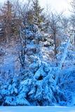在重的暴风雪以后的林业山坡 库存图片