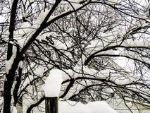在重的Sonow以后的一棵树 库存照片