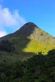 在野花和山的早晨光 免版税库存照片