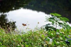 在野花和绿草的美丽的蝴蝶在山河岩石岸  库存图片