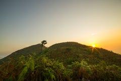在野花的早晨光 免版税图库摄影