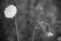 在野花的领域增长 免版税库存照片