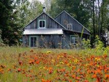 在野花的领域的老被风化的农舍 免版税库存照片