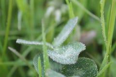 在野花的Waterdrops 免版税库存图片