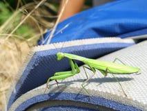 在野营的席子的螳螂 免版税库存照片
