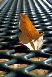 在野餐桌上的叶子在杰斯马丁停放,朱利安,加利福尼亚 库存照片