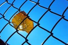 在野餐桌上的叶子在杰斯马丁停放,朱利安,加利福尼亚 免版税图库摄影