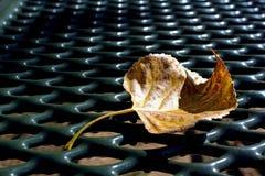 在野餐桌上的叶子在杰斯马丁停放,朱利安,加利福尼亚 免版税库存照片