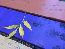 在野餐桌上的秋天叶子 免版税库存图片