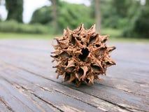 在野餐桌上的美国sweetgum果子与树在背景中 免版税库存照片